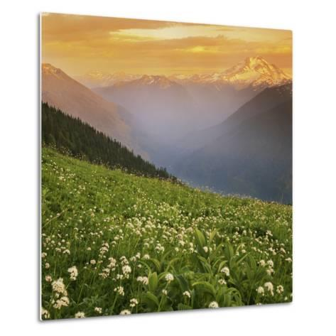 Hellebore and Sitka Valerian, Glacier Peak Wilderness, Washington, USA-Charles Gurche-Metal Print