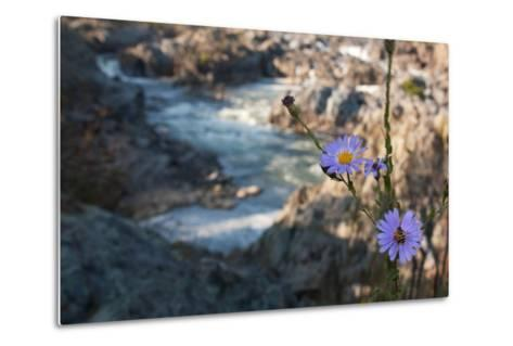 Wildflowers Above the Rapids of Great Falls on the Potomac River-Vickie Lewis-Metal Print