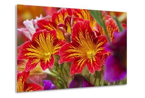 Summer Salpiglossis in Full Bloom, Washington, USA-Terry Eggers-Metal Print