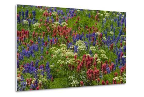 Wildflowers, Mount Timpanogos, Uintah-Wasatch-Cache Nf, Utah-Howie Garber-Metal Print