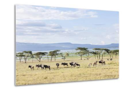 Lake Naivasha and Crescent Island Game Park, Naivasha, Kenya-Martin Zwick-Metal Print