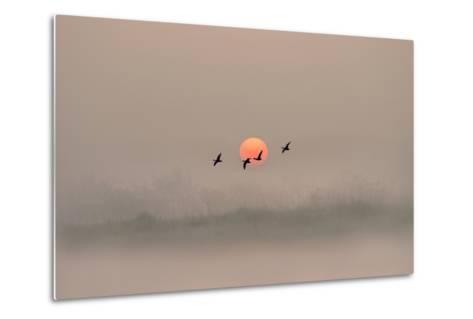 Dawn over the Marshland-Adrian Campfield-Metal Print