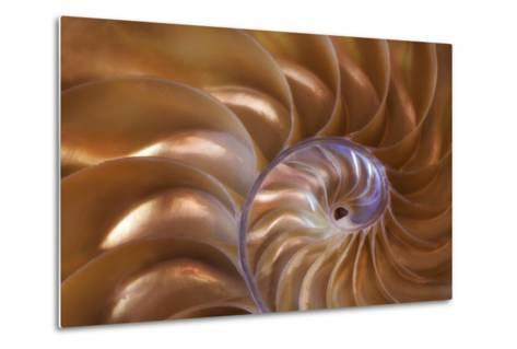 Abstract of a Nautilus Shell, Georgia, USA-Joanne Wells-Metal Print