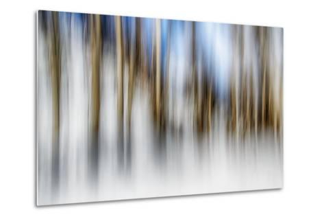 Winter Birches-Ursula Abresch-Metal Print