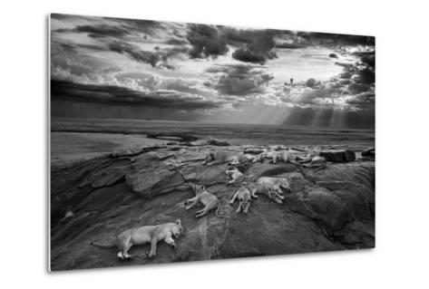 Lionesses and cubs from the Vumbi lion pride rest on a kopje, a rocky outcrop.-Michael Nichols-Metal Print