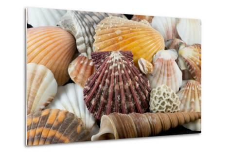 Detail of Seashells from around the World-Cindy Miller Hopkins-Metal Print