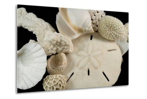 White Seashells, Sand Dollar, and Coral from around the World-Cindy Miller Hopkins-Metal Print