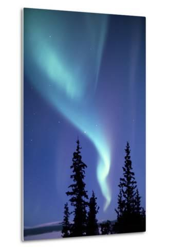 The Aurora Borealis, or Northern Lights, over Silhouetted Evergreen Trees-Ira Meyer-Metal Print