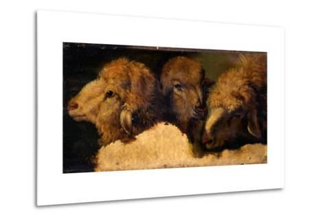 Painted Study of Sheep Heads-Francesco Londonio-Metal Print