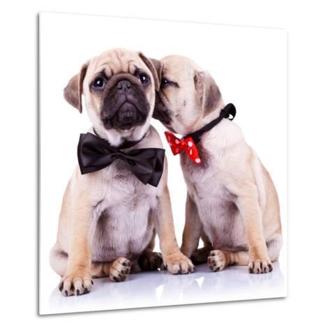 Lady Mops Puppy Whispering Something Or Kissing Its Gentleman Partner While Seated-Viorel Sima-Metal Print