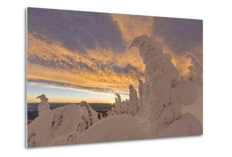 Snow Ghosts in the Whitefish Range, Montana, USA-Chuck Haney-Metal Print