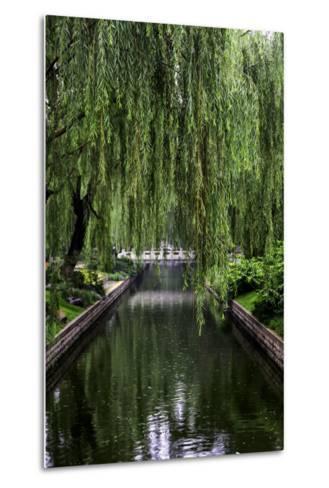 The Branches of a Weeping Willow Tree, Salix Babylonica, Hanging over a Calm Waterway-Jonathan Irish-Metal Print