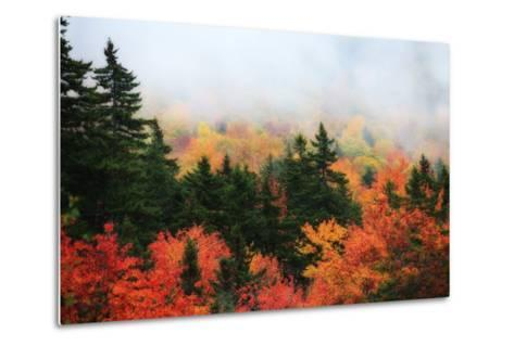 A Forest in Brilliant Autumn Hues Colors the Landscape Beneath a Thick Fog-Robbie George-Metal Print