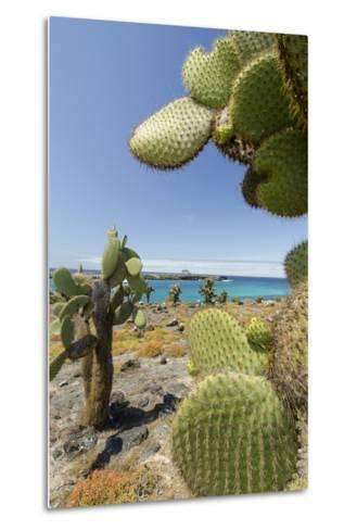 Giant Prickly Pear Cactus, South Plaza Island, Galapagos, Ecuador-Cindy Miller Hopkins-Metal Print