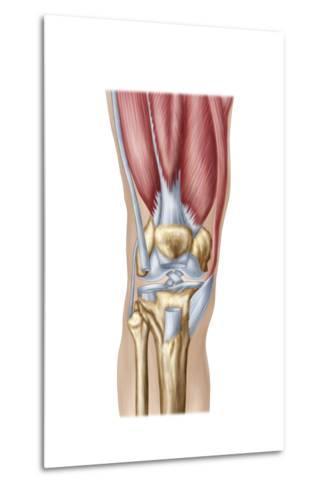 Anatomy of Human Knee Joint--Metal Print