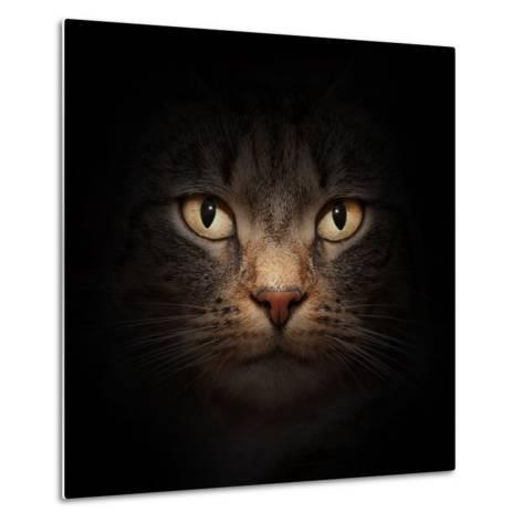 Cat Face With Beautiful Eyes Close Up Portrait-Michal Bednarek-Metal Print