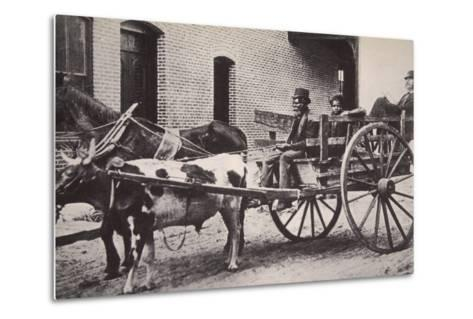 Mark Twain in the Back of a Horse and Ox Drawn Cart, Turn of the Century--Metal Print