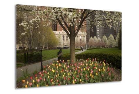 Trees and Tulips in Blloom in Mellon Green, Pittsburgh, Pa-Dave Bartruff-Metal Print