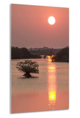 Sunrise, Mangroves and Water, Merritt Island Nwr, Florida-Rob Sheppard-Metal Print