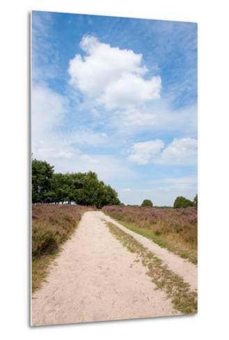 Landscape with Sand Path Purple Heath Fields in Summer-Ivonnewierink-Metal Print