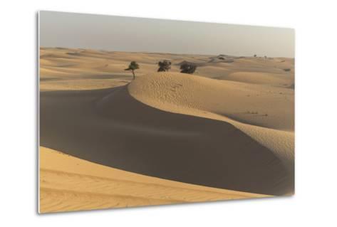 The Desert Near Liwa, Abu Dhabi, United Arab Emirates, Middle East-Angelo Cavalli-Metal Print