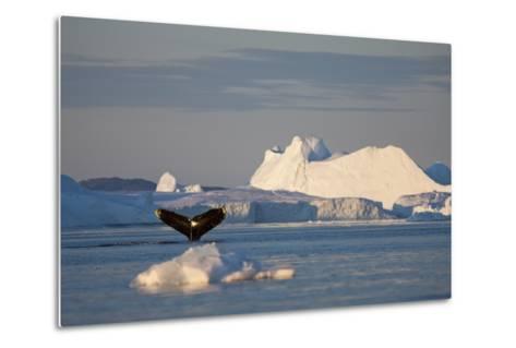 Humpback Whale in Disko Bay in Greenland-Paul Souders-Metal Print