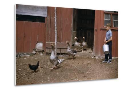 Boy Watching Geese Leave Barn-William P^ Gottlieb-Metal Print
