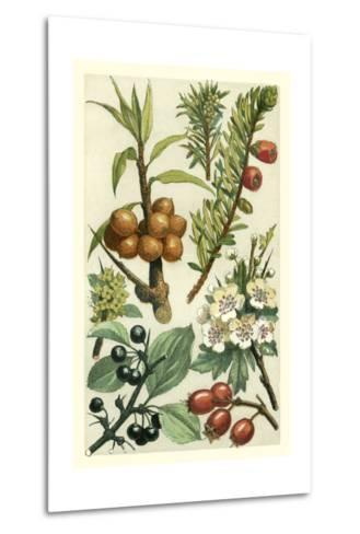 Fruits and Foliage III-Vision Studio-Metal Print