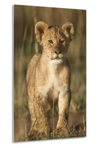 Lion Cub on Savanna in Masai Mara National Reserve-Paul Souders-Metal Print