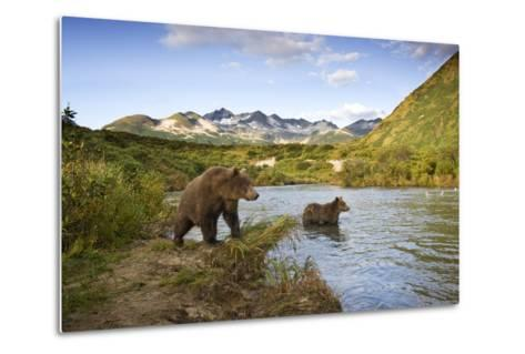 Two Year Old Grizzly Bears on Riverbank at Kinak Bay-Paul Souders-Metal Print