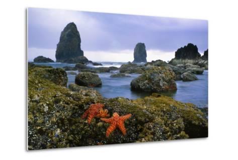 Cannon Beach Panoramic-Steve Terrill-Metal Print