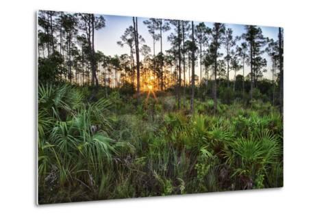 Sunrise in Mahogany Hammock-Terry Eggers-Metal Print