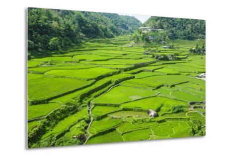 Hapao Rice Terraces, Banaue, UNESCO World Heritage Site, Luzon, Philippines, Southeast Asia, Asia-Michael Runkel-Metal Print