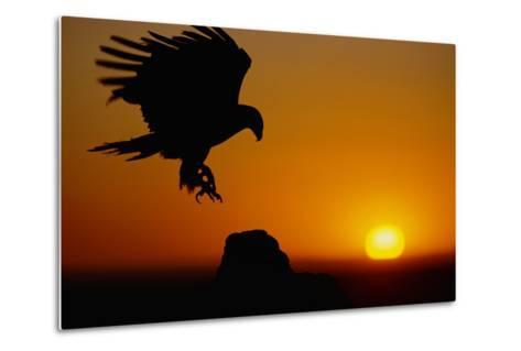 Golden Eagle at Sunset-W^ Perry Conway-Metal Print