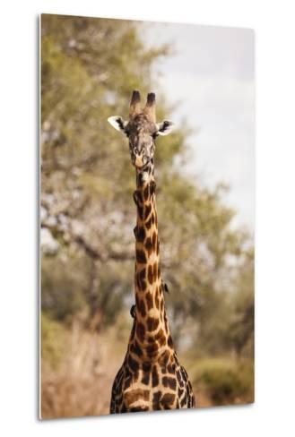 Endemic Thornicroft Giraffe-Michele Westmorland-Metal Print