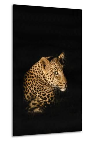 Leopard (Panthera Pardus), Madikwe Game Reserve, South Africa, Africa-Ann and Steve Toon-Metal Print