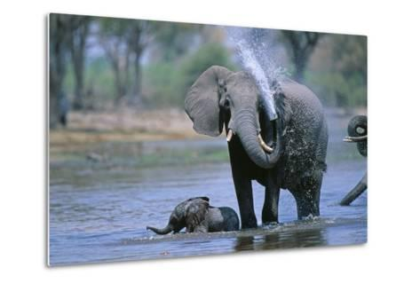 Elephant and Calf Cooling Off in River-Paul Souders-Metal Print