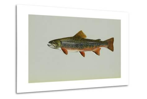 Brook Trout--Metal Print