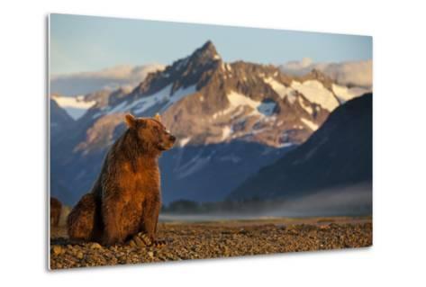 Brown Bear at Dawn, Katmai National Park, Alaska-Paul Souders-Metal Print