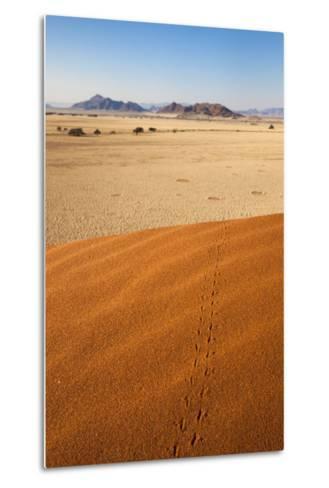 Animal Tracks in Sand, Namib Desert, Namibia, Africa-Ann and Steve Toon-Metal Print