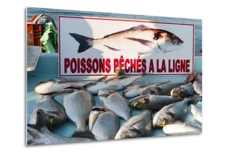 Sunday Fish Market at Vieux Port-Nico Tondini-Metal Print