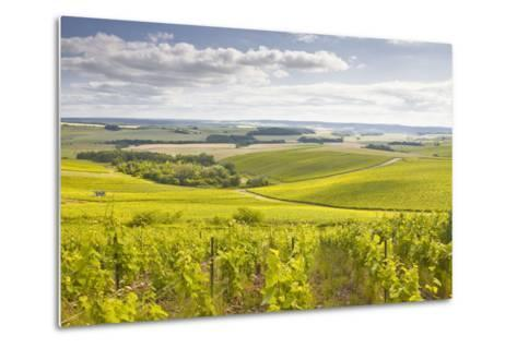 Champagne Vineyards in the Cote Des Bar Area of Aube, Champagne-Ardenne, France, Europe-Julian Elliott-Metal Print