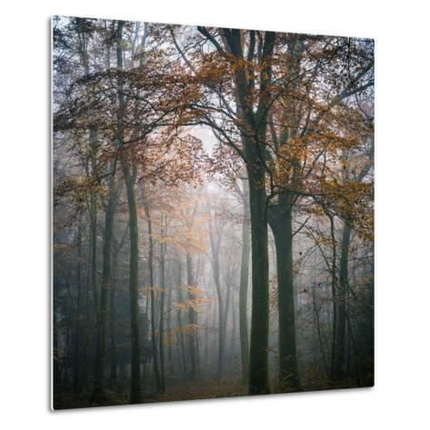 Forest Mood-Philippe Manguin-Metal Print
