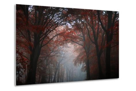 Red Forest-Philippe Manguin-Metal Print