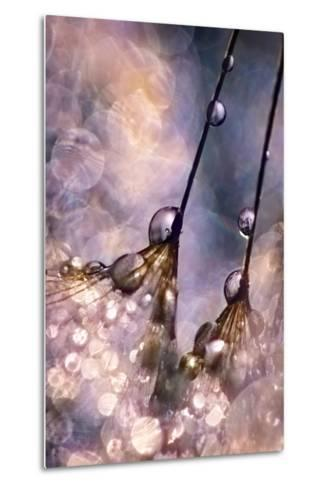 Dancing Seedlings-Ursula Abresch-Metal Print