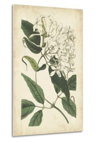 Botanical Display II-Vision Studio-Metal Print