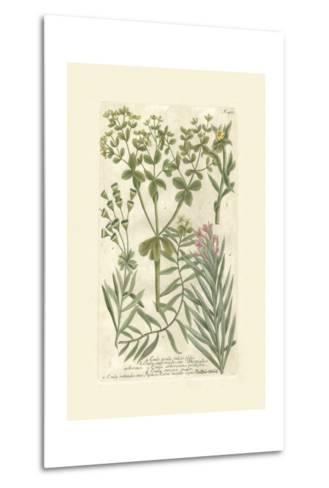 Garden Varietals III-Johann Wilhelm Weinmann-Metal Print