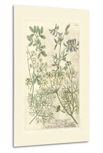 Garden Varietals IV-Johann Wilhelm Weinmann-Metal Print