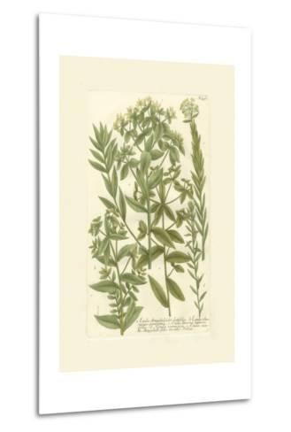 Garden Varietals V-Johann Wilhelm Weinmann-Metal Print