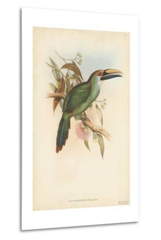 Tropical Toucans I-John Gould-Metal Print